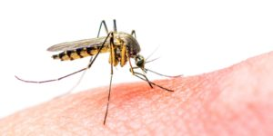 Zika Virus Pregnant Risk